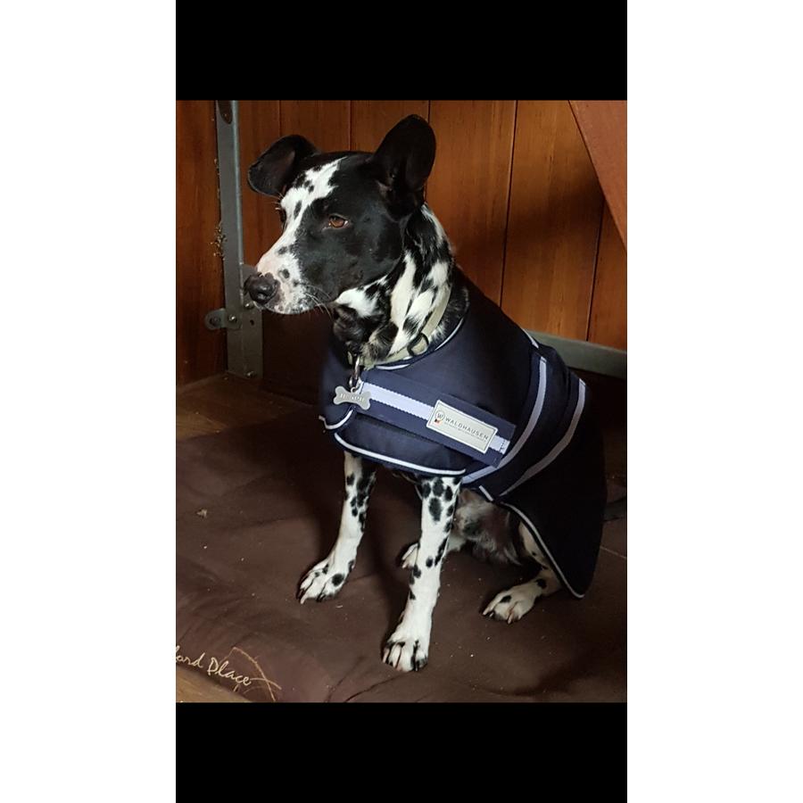 Coperta comfort per cani da 200 g waldhausen articoli for Articoli per cani