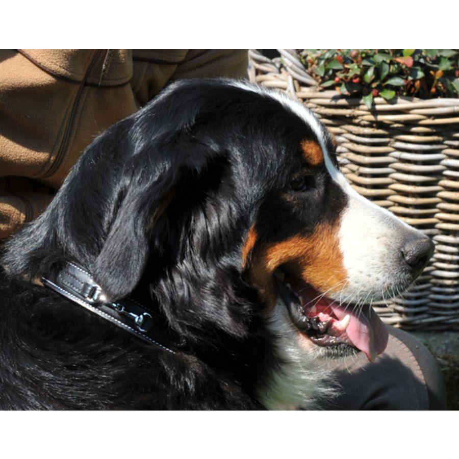 Collare per cani morso hkm sports articoli per cani la for Articoli per cani